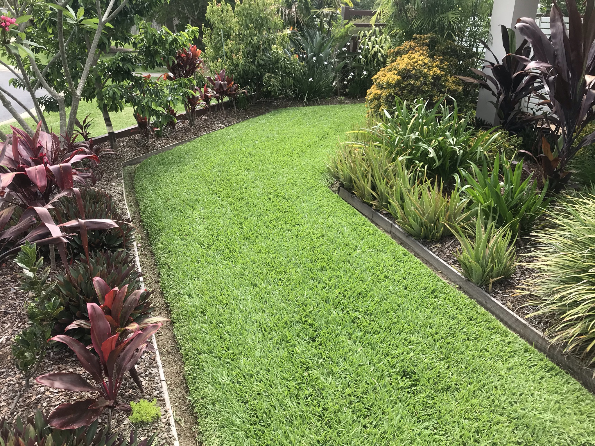 Garden Green grass | Best Lawn for Brisbane | Brisbane's Best Lawns – Blog Featured Image
