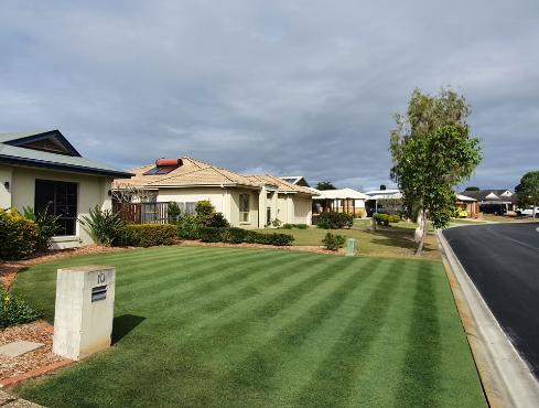 beautiful perfect green lawn