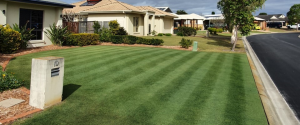 beautiful perfect green lawn